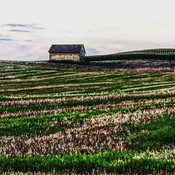 Landscape-14
